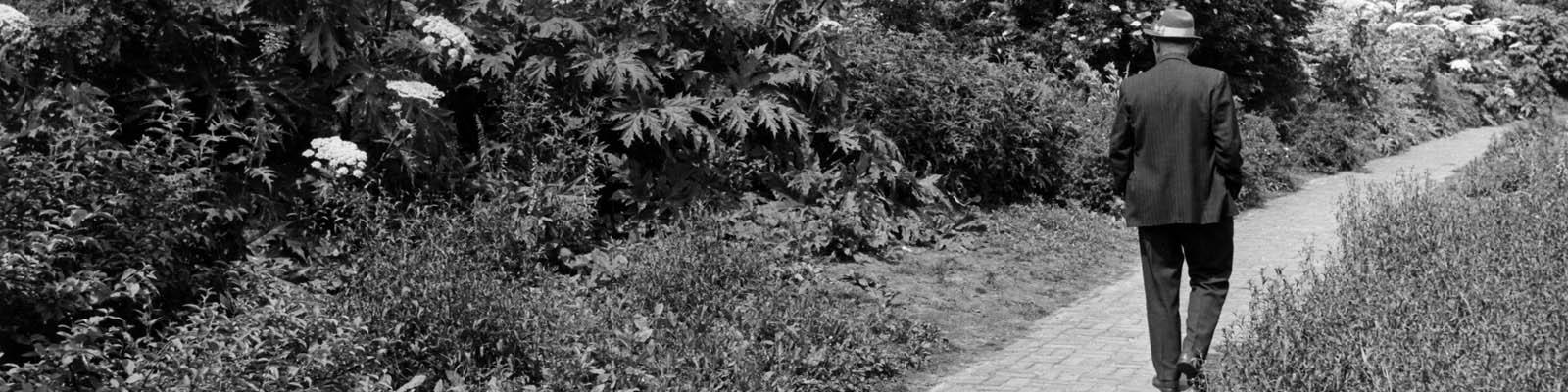 Le Roy tuin 50 jaar: 1966 - 2016